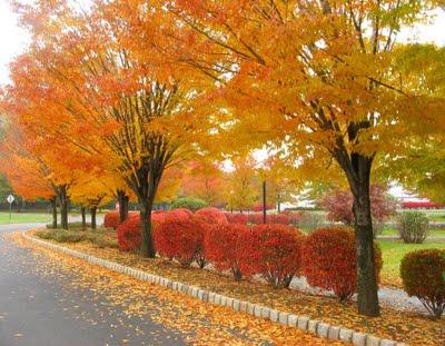 Autumn New Jersey