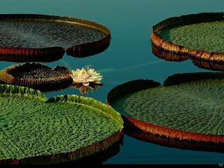 Nature Wet Wet Flower