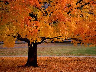 Gambar Autumn Musim Gugur