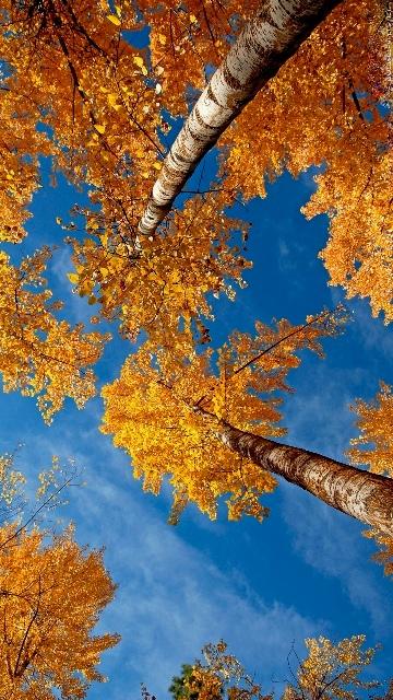 Autumn, Musim Gugur