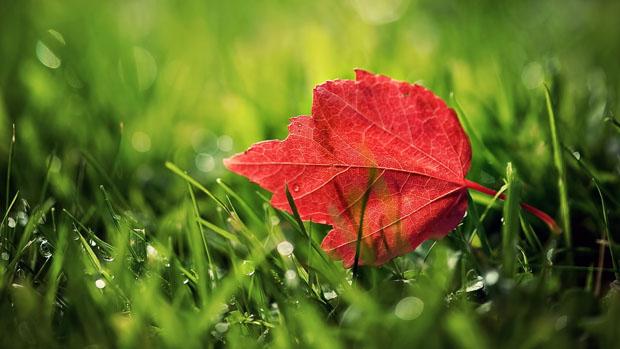 Flower above the Grass